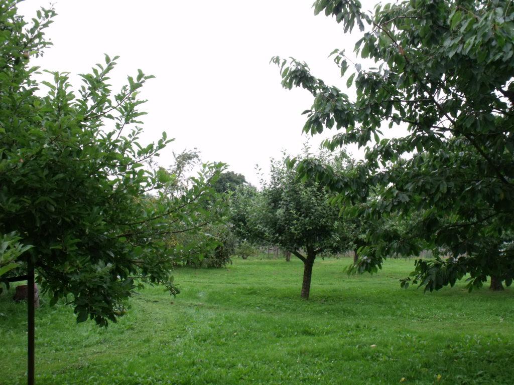 Äpfel, Birnen, Kirschen, Zwetschgen, Reneclauden und Quitten. Das wird erweitert!