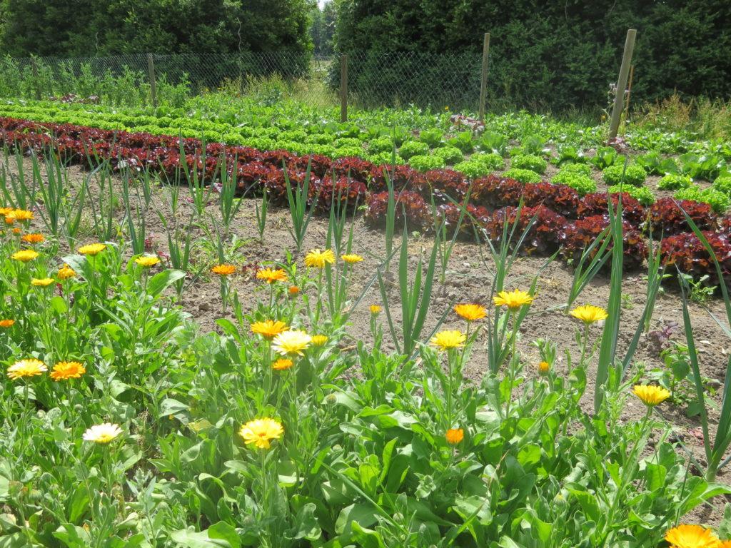 """Die Abwehrpflanze ist bei unserem Anbau nicht ersetzbar durch Chemie. Ist auch nicht nötig :)  An den Bauernverband: """"Es geht auch ohne Chemie, Danke!"""""""