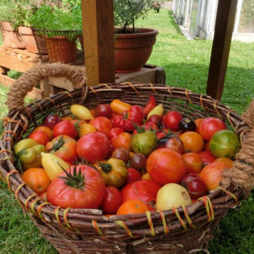 Tomatenkorb