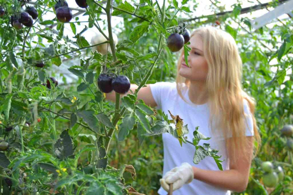 Das Geheimnis der Antho-Tomaten kannst du dir auf YouTube Kleverhof anschauen.