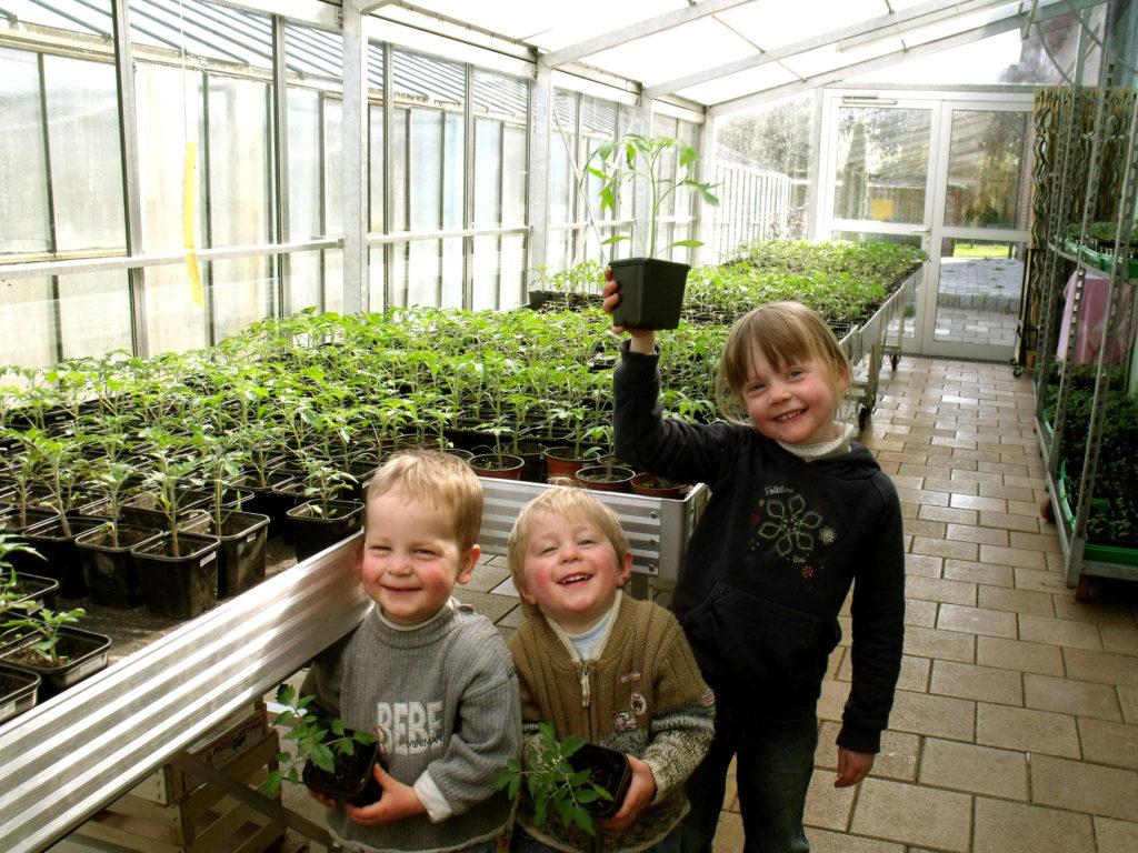 10.000 Pflanzen, mehr als 200 verschiedene Tomatensorten von Mitte April bis Ende Mai.  Foto vom 10. April 15:49 Uhr.
