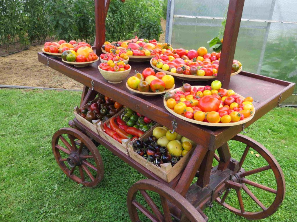 Eine schöne Deko. Hält nur nicht lange, nach dem Photo werden die Tomaten ruck-zuck verkauft.