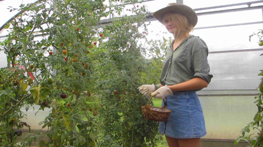 Haarige Tomatenpflanzen?!