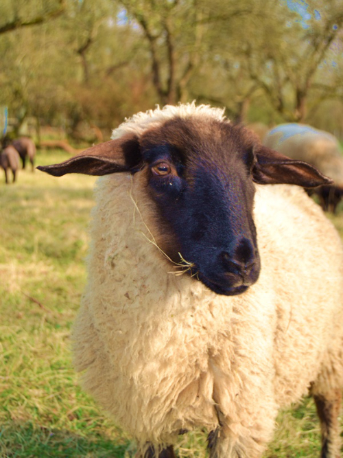 Demeter Tierhaltung. Tierwohl = Menschenwohl