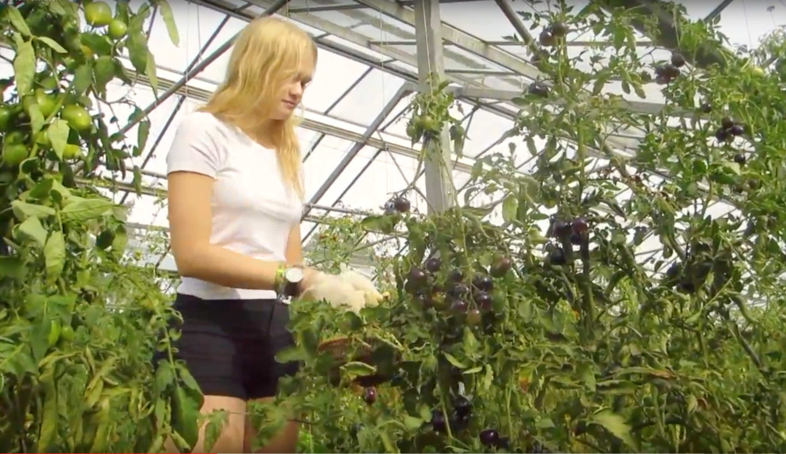 Lotti bei den schwarzen Tomaten