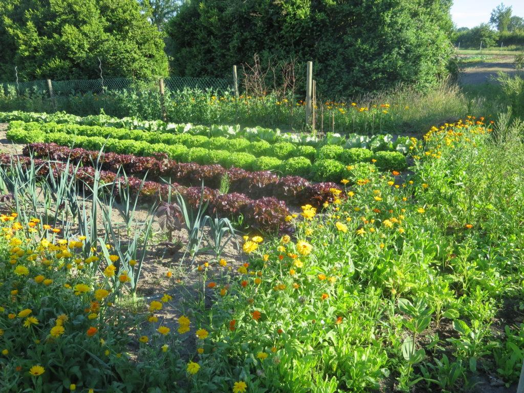 Das Gemüse bildet bei uns eine Symbiose mit der Natur.