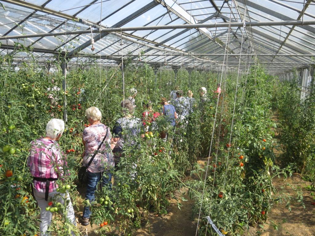 Entdecke die Tomatenvielfalt!
