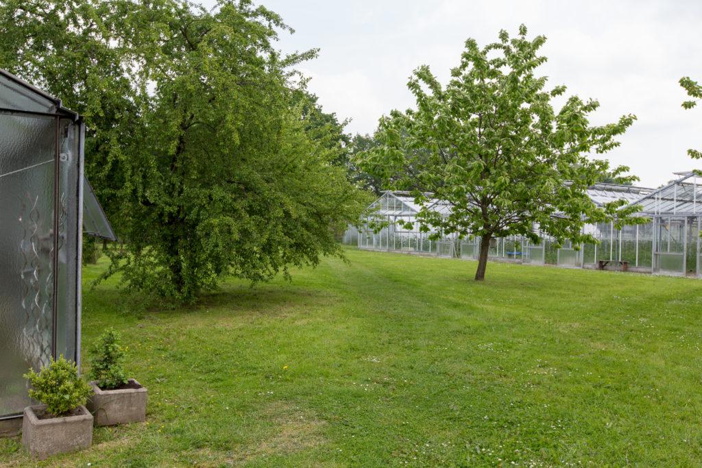 Unsere Gärtnerei bildet einen Einklang mit der Natur. Darauf sind wir stolz.