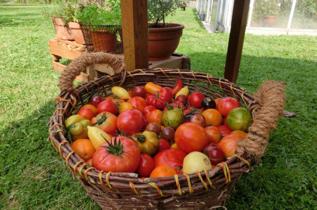 Zur Voll-Erntezeit im August und September kannst du im Kleverhof reichhaltige Beute machen.