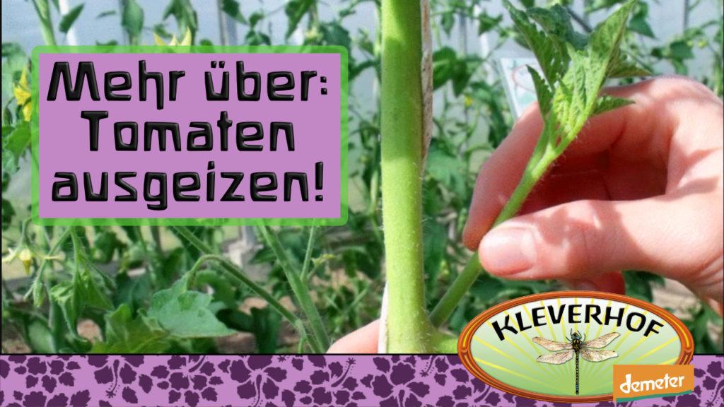 Auf unserem YouTube Kanal kannst du auch lernen, wie du Tomaten behandelst.